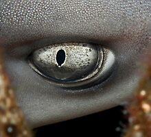 Eye of a Whitetip Reef Shark by Marcel Botman