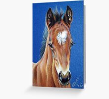Foal #1 Greeting Card