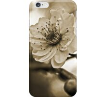 Cherry Blossoms in Sepia #2 iPhone Case/Skin