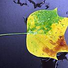 tricolored leaf by Cornelia Togea