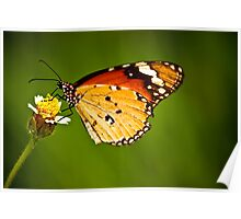 Butterfly !! Poster