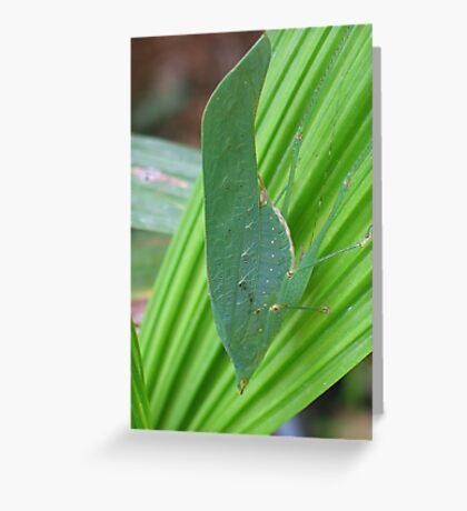 Leaf Insect Greeting Card