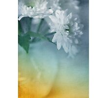 Whispery White Vintage in Vase Photographic Print