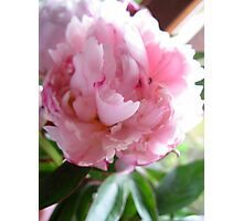Soft Pink Beauty Photographic Print