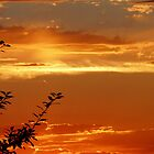 orange sunset by tego53