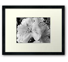 Pink Abundance in B-W Framed Print