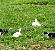 Cat, Rabbit, Duck & Geese by AnnDixon