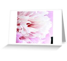 Baby Pink Greeting Card