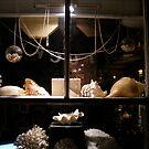 Shells by richeb