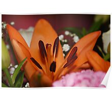 *Hemerocallis fulva (Orange Lily)* Poster