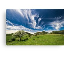 spring landscape with green grass and tree and blue sky Canvas Print