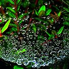 Emerald Eyes by naturelover