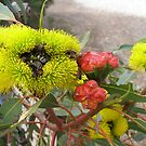 Bees in Red Capped Gum flowers, illyarrie gum. by Rita Blom