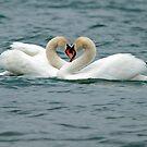 Swans Hearts by David Freeman