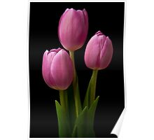 Three Tulips Poster