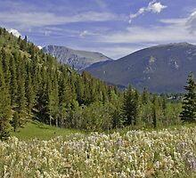 HIdden Valley Rocky Mountain National Park by Luann wilslef