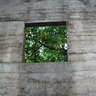 Sawdust Bunker Timeless Window by linmarie