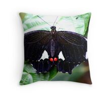 Male Orchard or Citrus Swallowtail Butterfly (Papilio Aegeus) Throw Pillow
