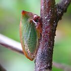 Horned Green Treehopper by Vanessa Barklay