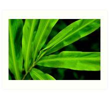 Green Scale Art Print