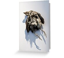 Poor Little Dead Bird Greeting Card