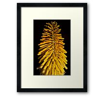Yellow Brush Framed Print