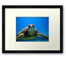 Slow Mover Framed Print