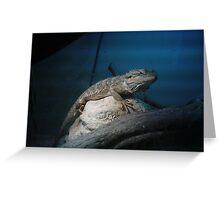 Dragon (lizard) Greeting Card