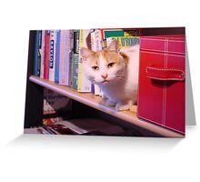 Bookworm kitty Greeting Card