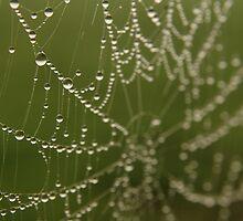 Dew web by wire-man