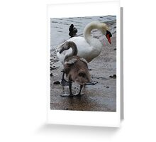 swan and baby Greeting Card