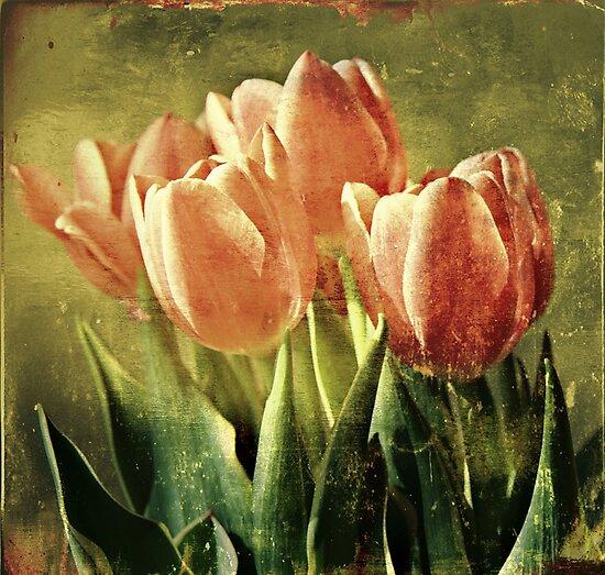 Tulips by Caterpillar