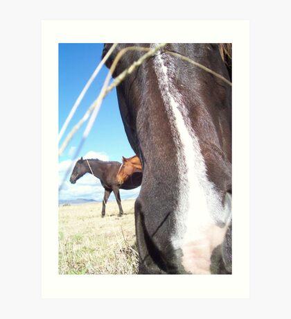 Nosey Horsey Art Print