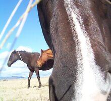 Nosey Horsey by speedyhorse8