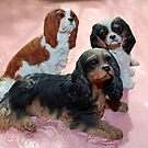 Collection of Cavaliers by AnnDixon