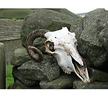 Sheep's skull Photographic Print