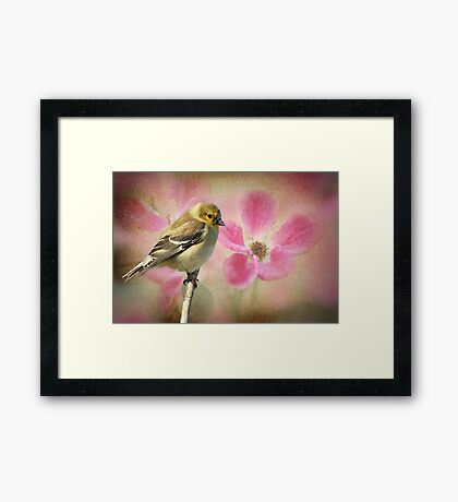 Winter Goldfinch/Summer Roses Framed Print