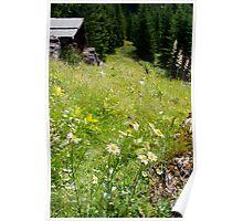 Alpine Pasture Poster