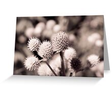 Toned Flower Greeting Card