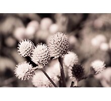 Toned Flower Photographic Print