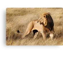 Male lion - Okavango Delta, Botswana Canvas Print