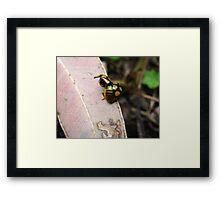 Ladybird Liftoff Framed Print