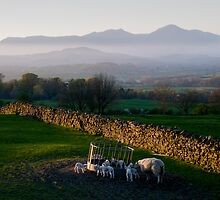 The view from Lowick in spring by Simon Hathaway