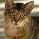 cat with mosquito by Bine