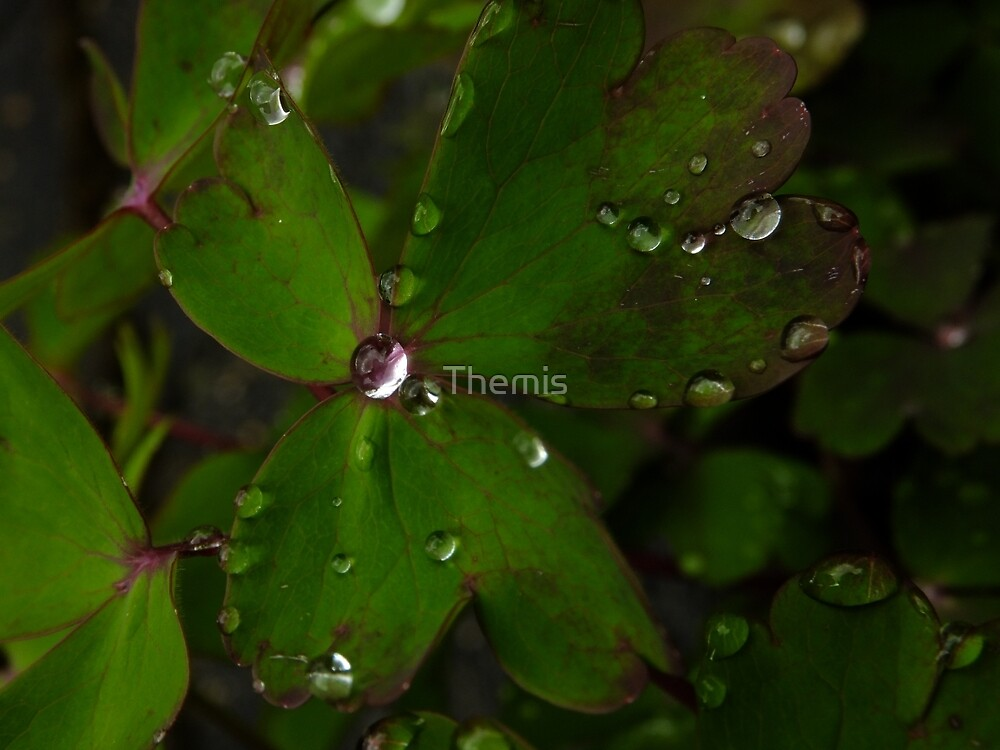 April Showers come with diamonds by Themis