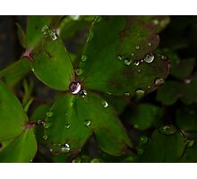 April Showers come with diamonds Photographic Print