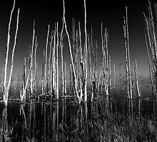 lifeless tree's by kathy s gillentine