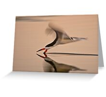 Black Skimmer Solo Greeting Card