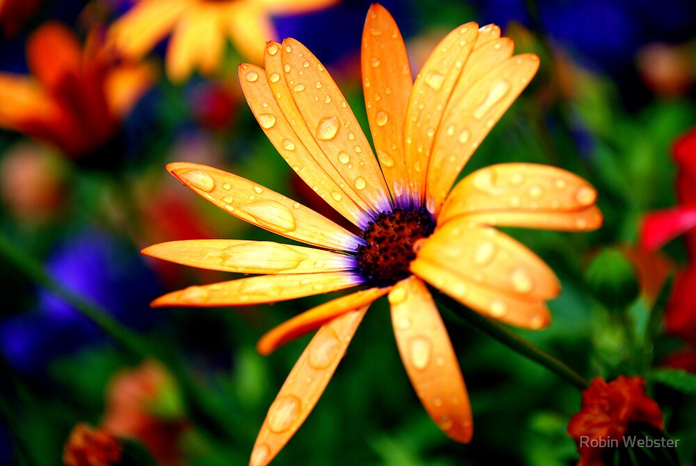 Droplets After the Rain by Robin Webster