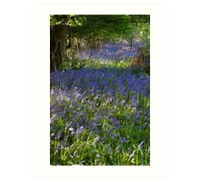 Bluebell Woods III Art Print